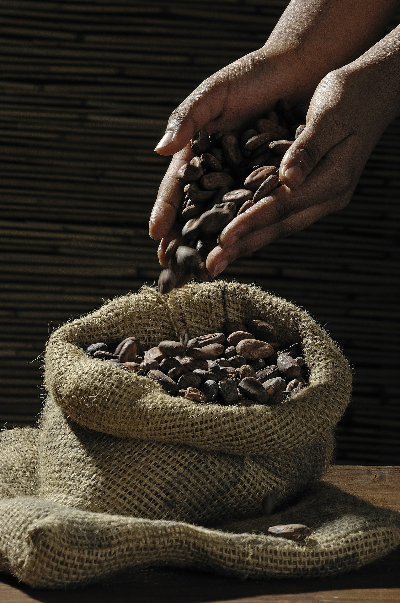 hands pouring cocoa beans into sack